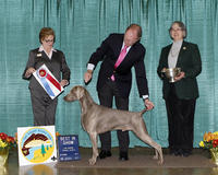 San Joaquin Kennel Club Annual Dog Show
